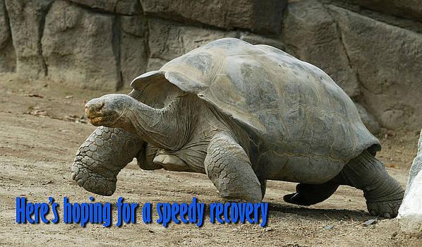 Speedy Recovery by Monica Lahr