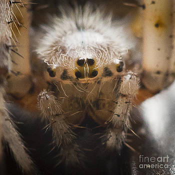 Darcy Michaelchuk - Spider Eyes
