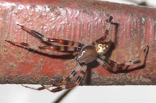 Spider by Heather Jett