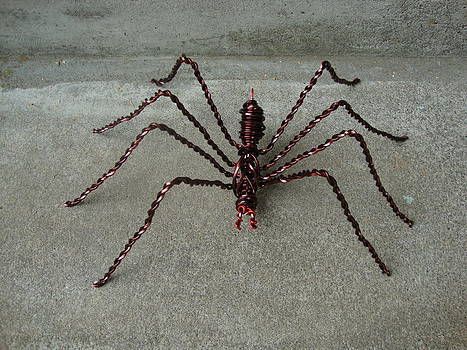 Spider by Scott Faucett