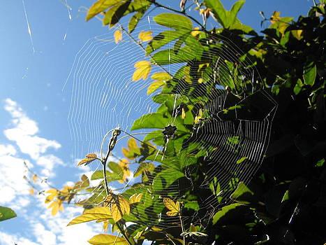 Spiderweb by Gloriana Hernandez