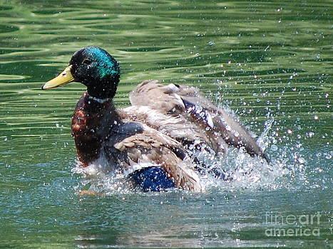Splish Splash by Bill Dinkins