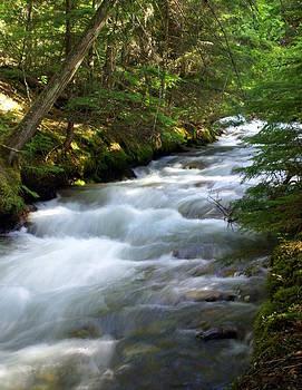 Marty Koch - Sprague Creek Glacier National Park 2