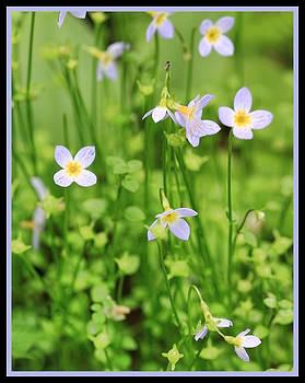 Shari Jardina - Spring Beauties