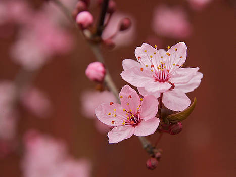 Spring Blossoms by Bob Smithing