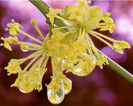 Spring droplets by Sasse Photo