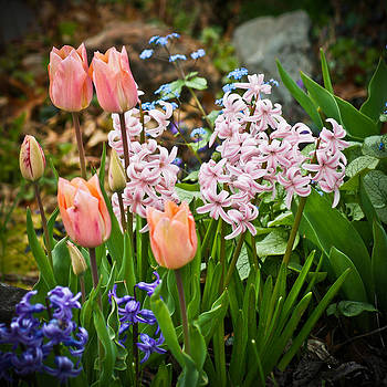 Spring Flowers by Jake Johnson