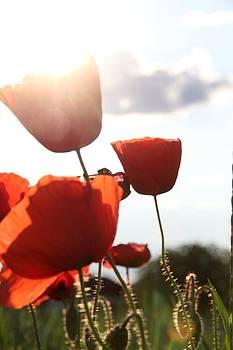Spring Flowers by Kent Andersen