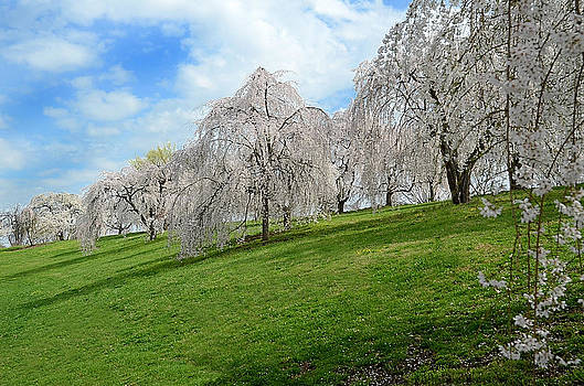 Spring in the park by Michael Austin