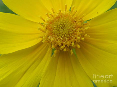 Spring Is Here by Cindy Hudson
