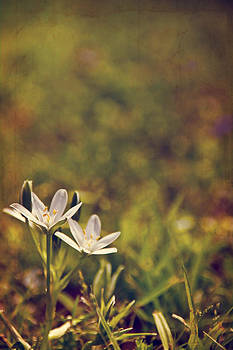 Spring Meadow by Suzanne Barber