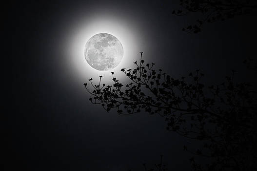 Spring Moon by Donnie Smith