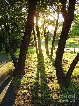 Spring Shadows by Iris M Gross