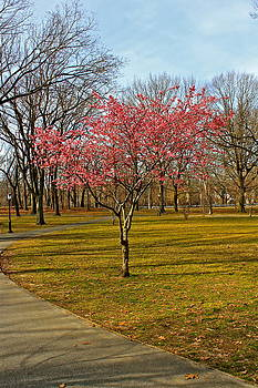 Spring Tree Blooms  by Felix Zapata