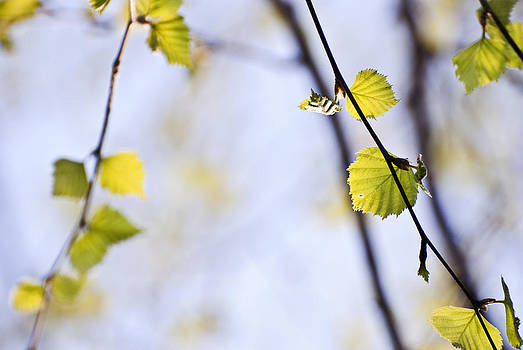 Spring by Yuri Santin
