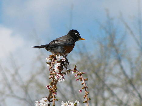 Spring's Arrival by Rhonda Jones