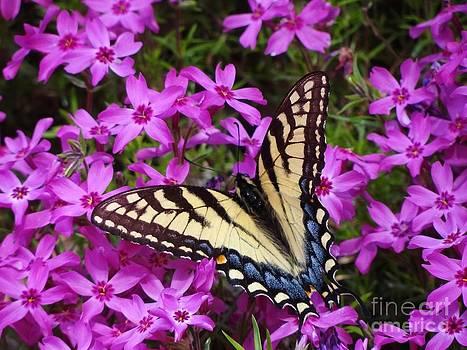Spring's Beauty by Crystal Joy Photography