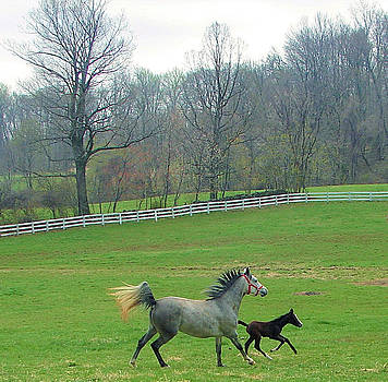 Springs First Prance by Heather  Boyd