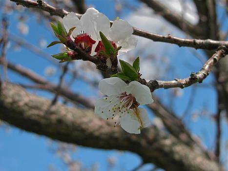 Springtime by Rhonda Jones