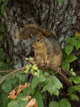 Debi Ling - Squirrel