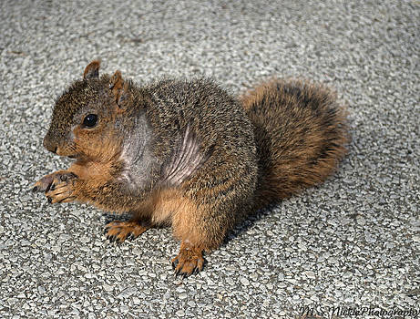 Squirrel by Melissa Nickle