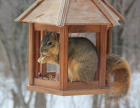 Squirrel Sneaking Food by Donna Bosela