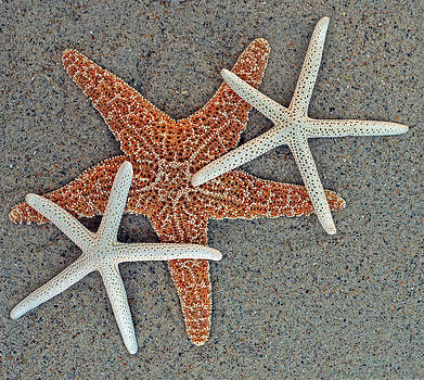 Starfish Three by Sandi OReilly