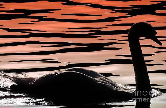 Still Waters by J J  Everson