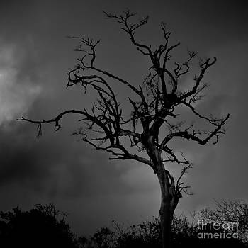 Stormy Tree by Kevin Barske