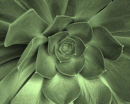 Succulent Splendor by Pamela Rose Hawken
