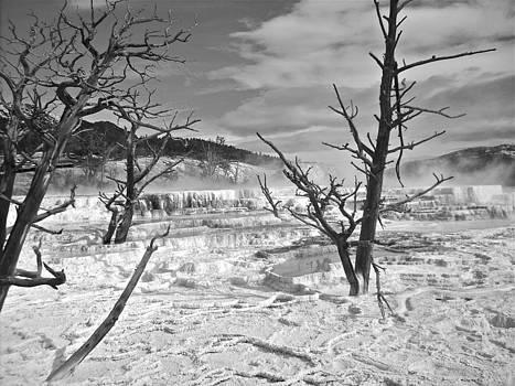Sulphur Springs Yellowstone National Park by Carol Fielding