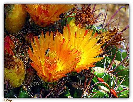 Summer Blooms by Terry Temple
