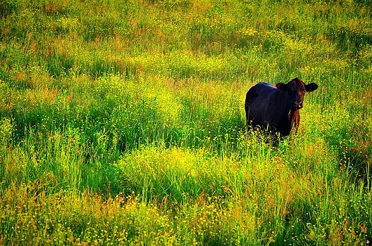 Emily Stauring - Summer Cow
