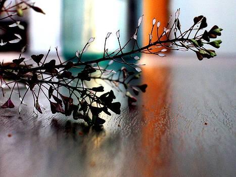 Summer Dream by Ioana Geacar