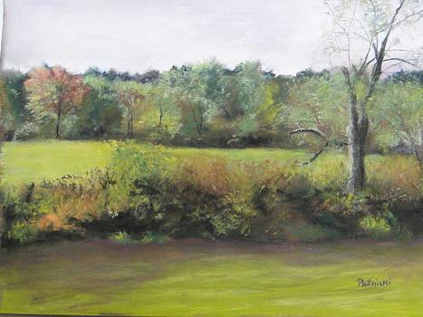 Summer Meadow by Cindy Plutnicki