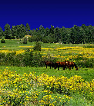 Peri Craig - Summer Meadow