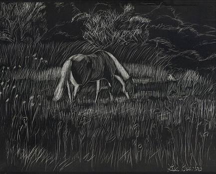 Summer Pasture by Lisa Guarino