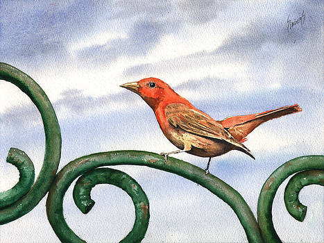 Summer Tanager by Sam Sidders