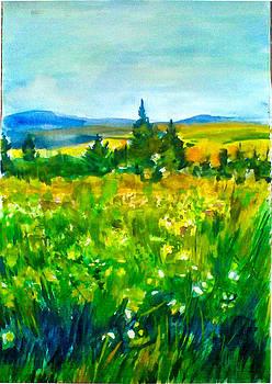 Summer by Vaidos Mihai