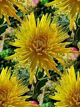 Summer Yellows One by Lynn De Serres