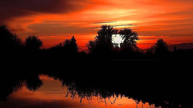 Sun beneath the trees by Viveka Singh
