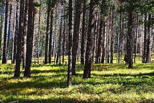 Sun Dappled Trees No. 2 by Daryl Hanauer