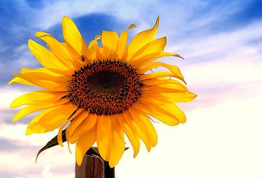 Lynnette Johns - Sun In The Sky