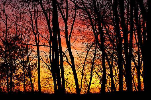 LeeAnn McLaneGoetz McLaneGoetzStudioLLCcom - Sun Set of Fire