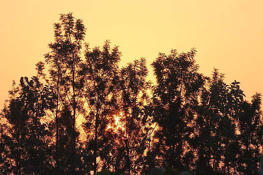 Sun shine by Manaswinee Mohanty