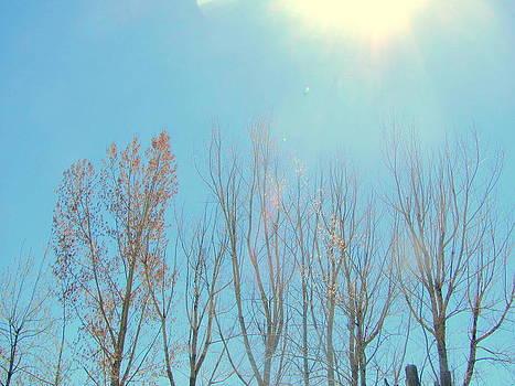 Sun Shining on Trees by Amy Bradley