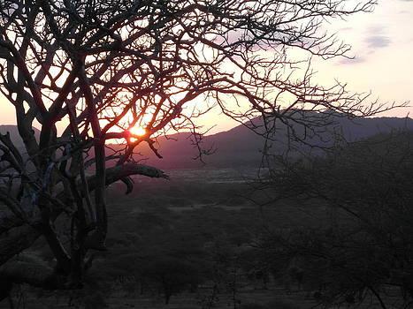 Sundown by Carol Evans