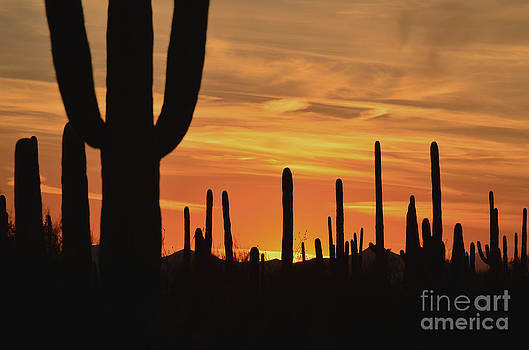 Sundown Tucson  by Judy Grant