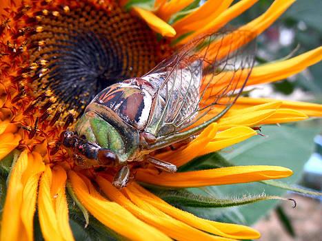 Jon Baldwin  Art - Sunflower and Insect