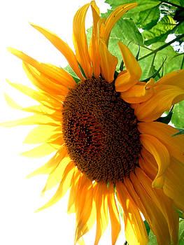 Jon Baldwin  Art - Sunflower Angle
